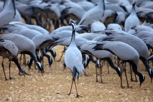 Image: courtesy birdingblogs.com