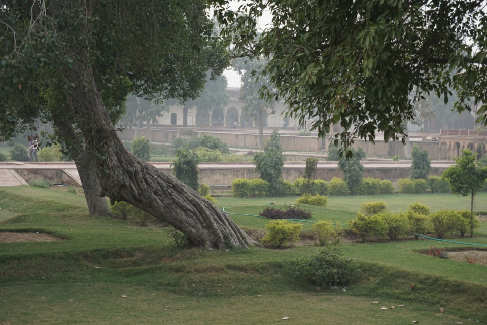 A timeless pleasure garden in a forgotten palace