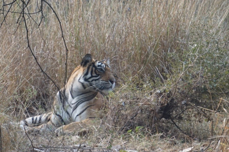 Shere Khan. Her real name, said the guide, is Noor...
