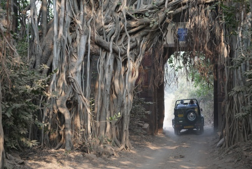 the entrance to the reserve is through the old Ranthambore fortress gate