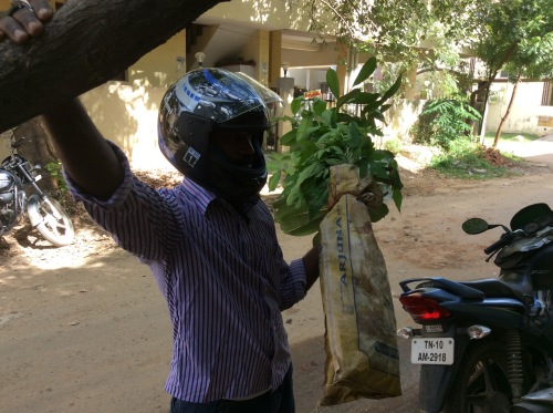 Sukumar with another tree for the school.