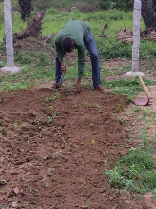 An organic garden, first steps